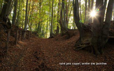Les agences événementielles de la région Hauts-de-France, aux petits soins pour célébrer vos retours en présentiel
